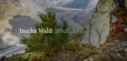 Forschungsprojekt der WSL auf der Riederalp mit dem Forst Aletsch.